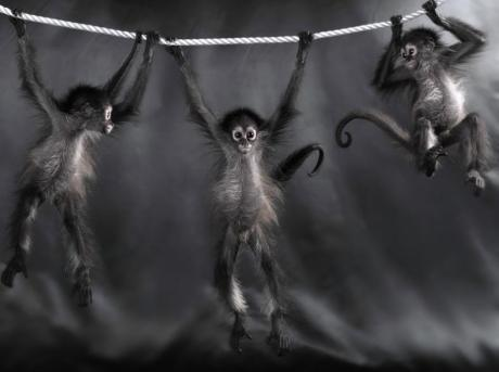 spider-monkeys-lennette-newell.jpg?w=460&h=343